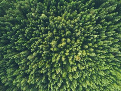 A birdview photograph of a forest